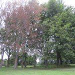 Climate pins down dreaded tree disease
