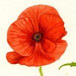 In memory of Private John Hatley (1879-1917)