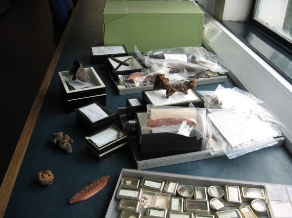 Drawers of carpological material