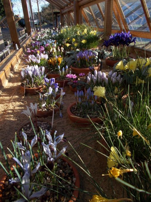 Alpine House February 2018