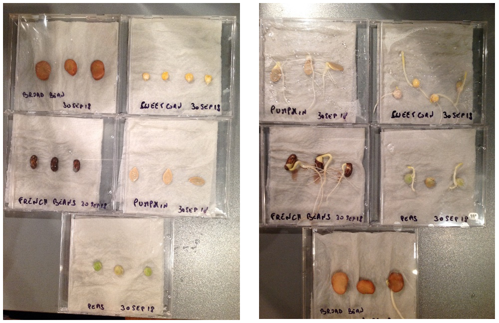 Different seed being grown in CD cases