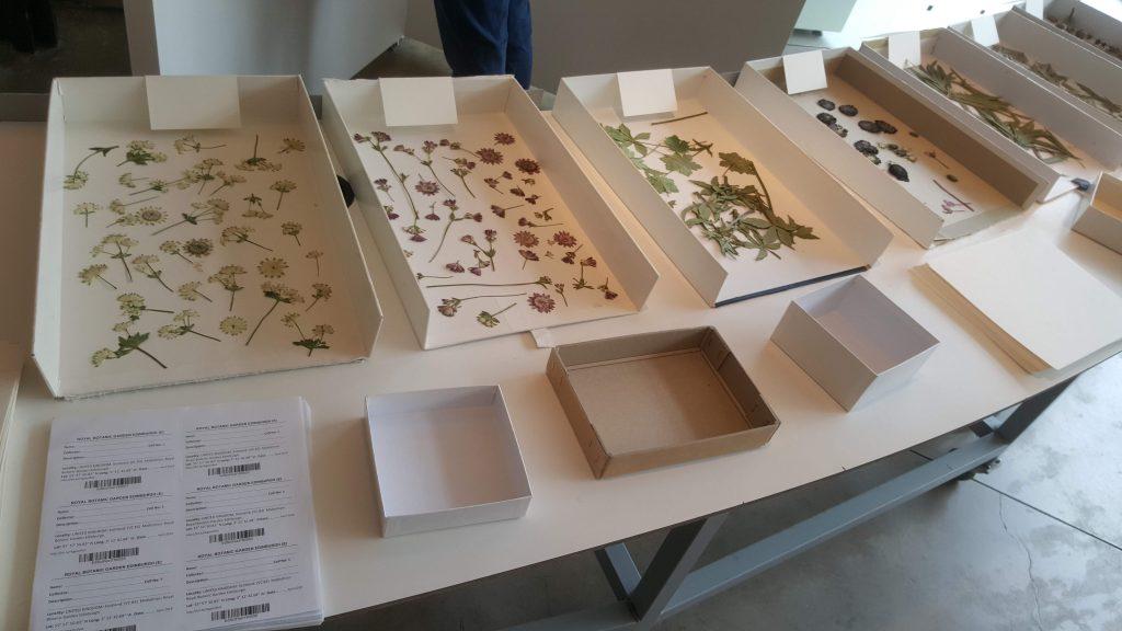 Material for specimens
