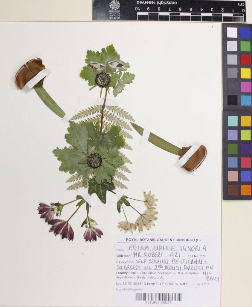 Frankenstein's Plants specimen