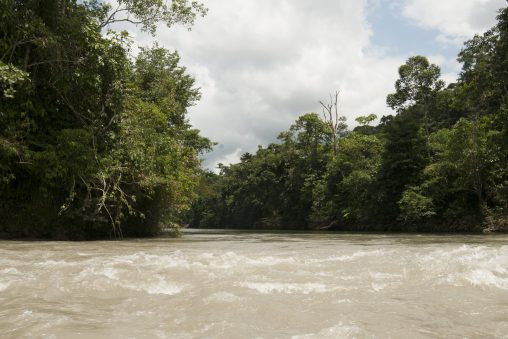 A wide, brownish river with white-crested waves on the surface, flanked by dense green forest