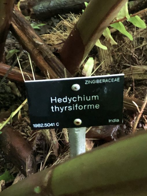 Image of specimen label