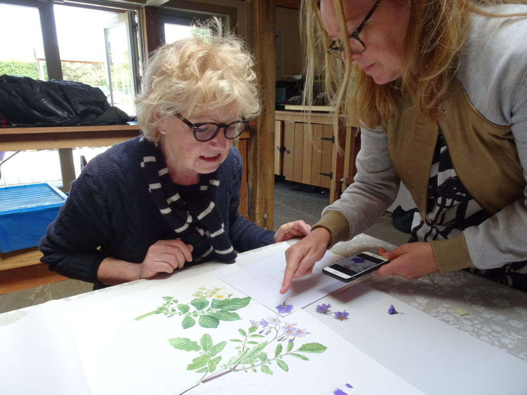Two women reviewing the botanical painting being produced of the Edinburgh potato.