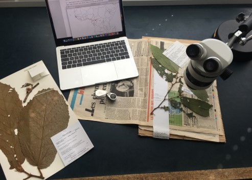 Laptop commputer, herbarium specimens and microscope.