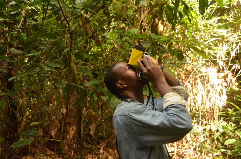 A man (shown from waist up) standing in a tropical forest using a tool to look up to the top of a tree and measure its height
