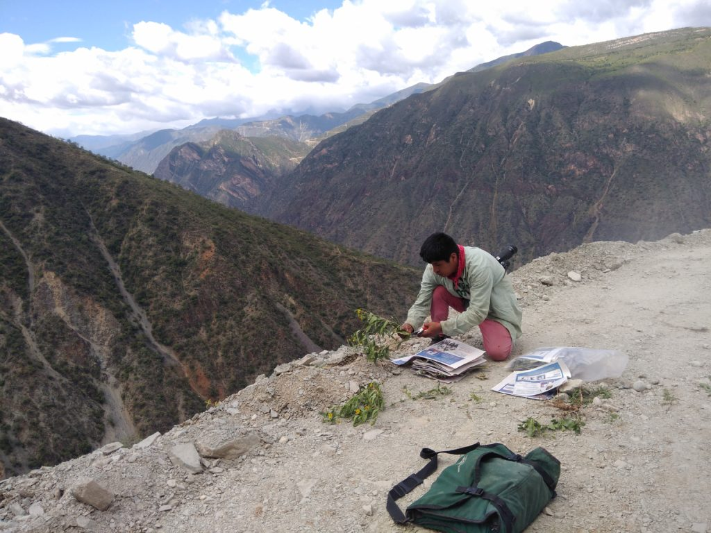 A man putting a plant into newspaper at then edge of a dusty road, behind him mountains can be seen.
