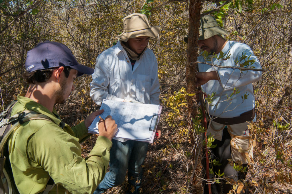 Painstaking work - Establishing a permanent forest plot in dry forest in Bahia State, Brazil.