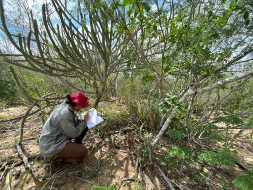 Monitoring Dry Forests in Bahia, Brazil
