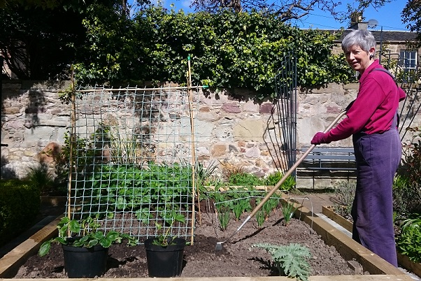 Photograph of Helen Bennett working at a raised bed in her garden