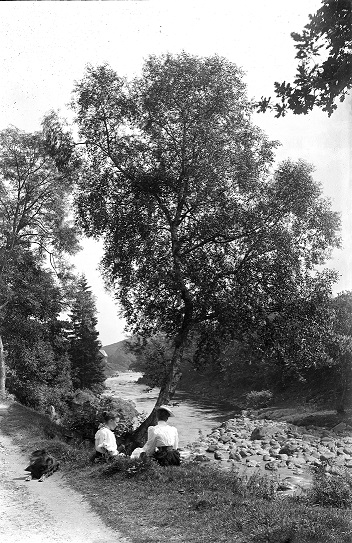 Black and white photograph taken by George Paxton of a young birch tree