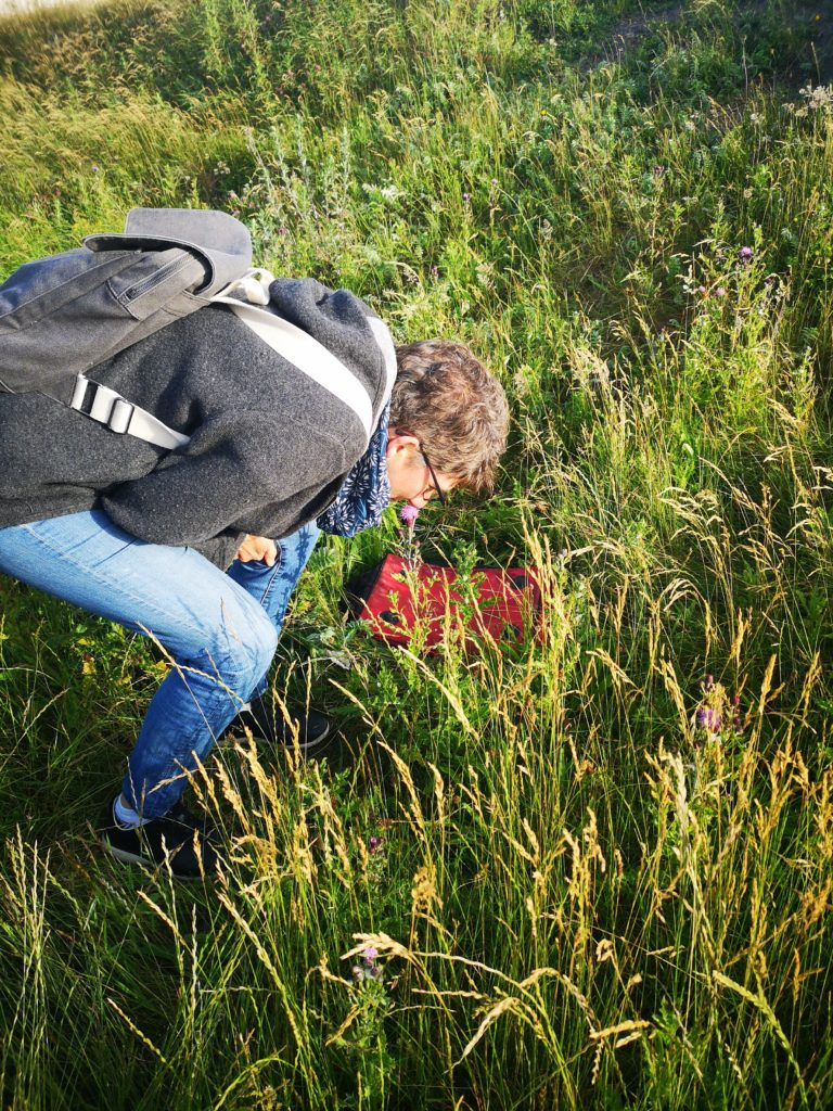 Image shows a person bending down into long grass to look at some wildflowers.