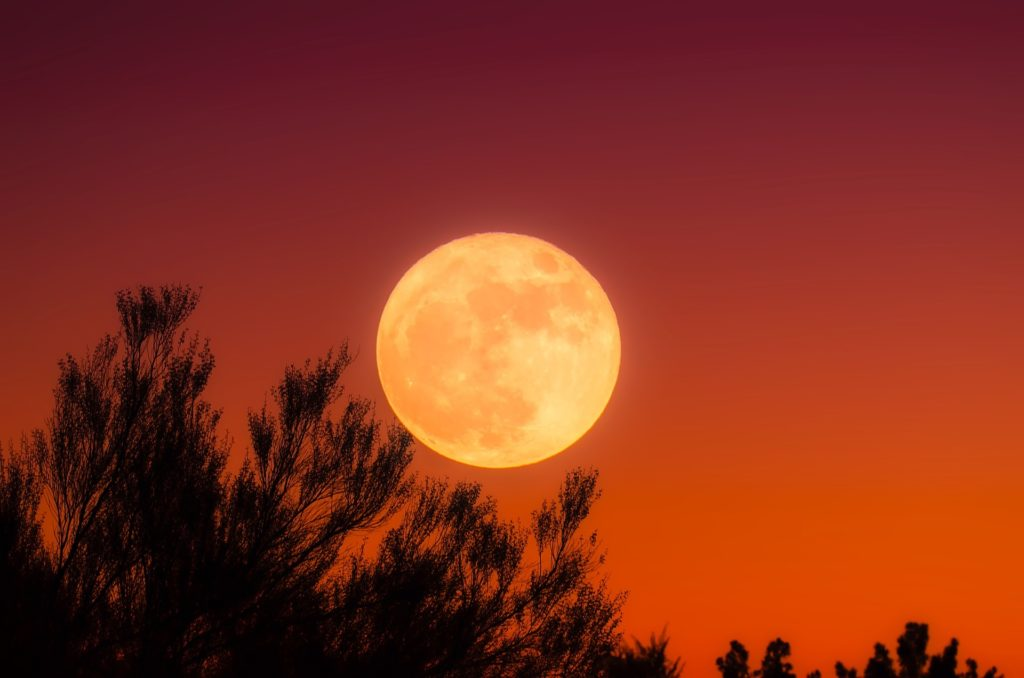 An image of the rising harvest moon over trees against a reddish sky