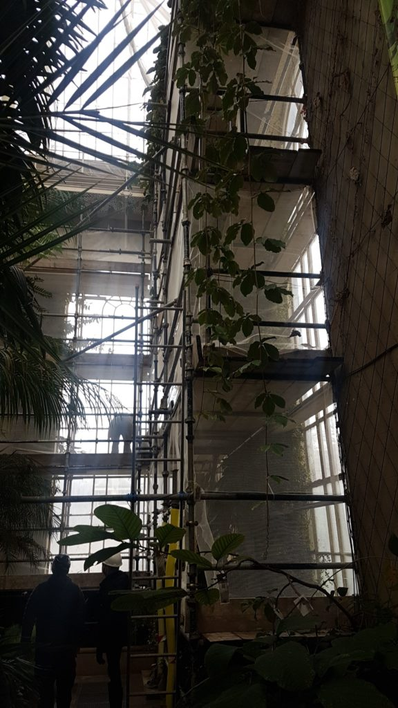Scaffold system within temperate house