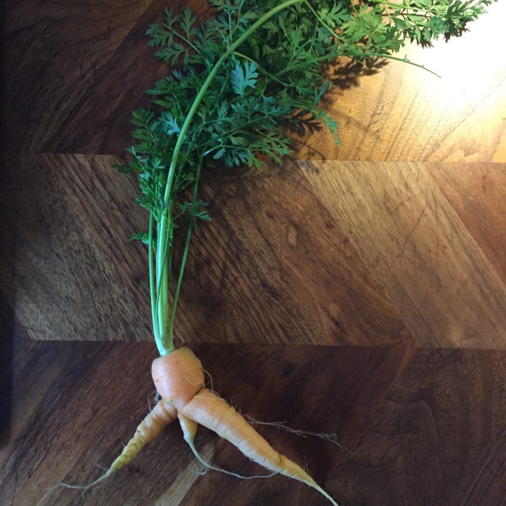 A carrot on a table that is said to look like the shape of a football streaker running across the pitch!