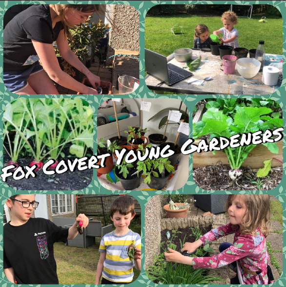 A collage of images of young people who have been learning food growing skills. They are tending their plants and showing the radishes they have grown.