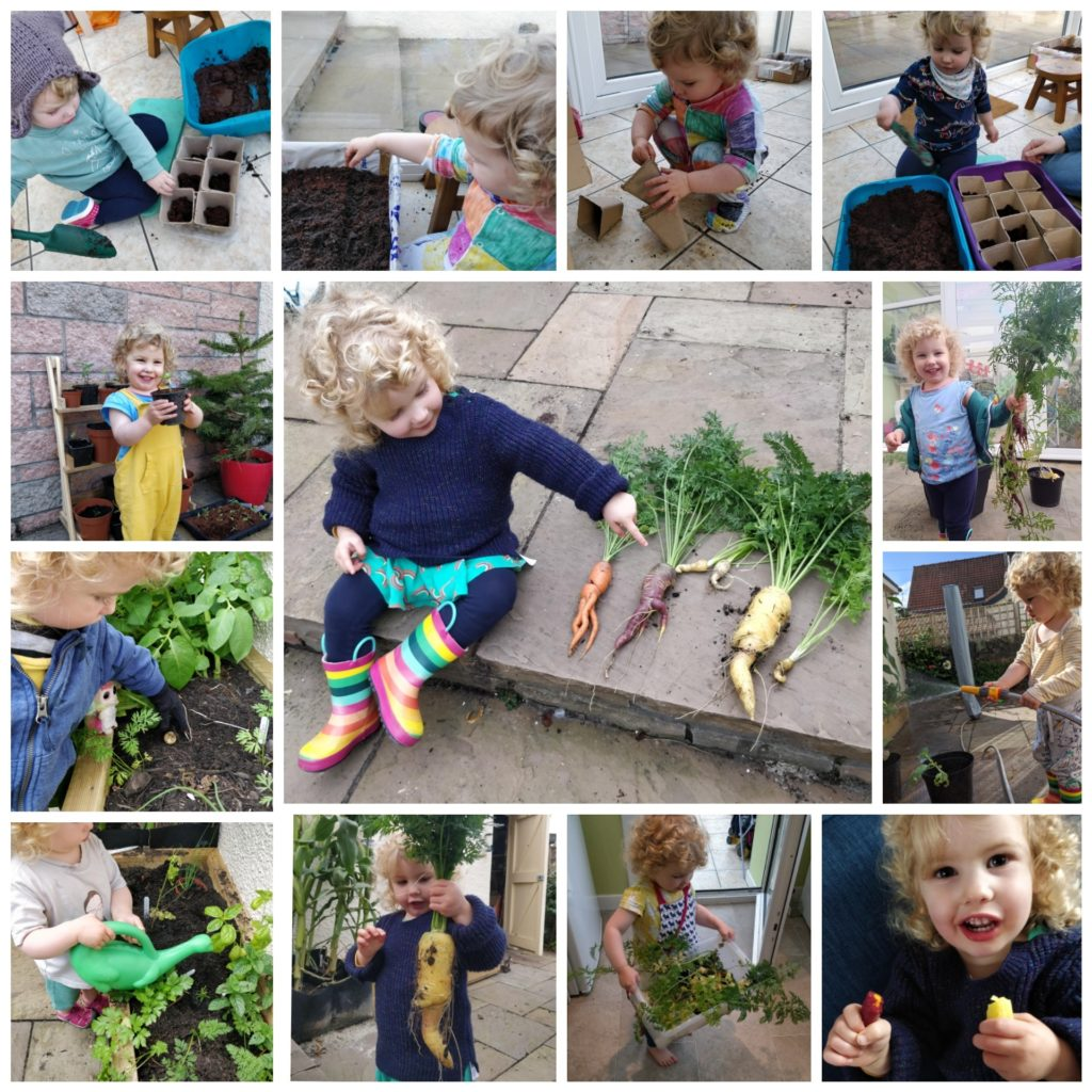 A collage of images of a child growing their own carrots from planting the seeds to digging them up and eating them