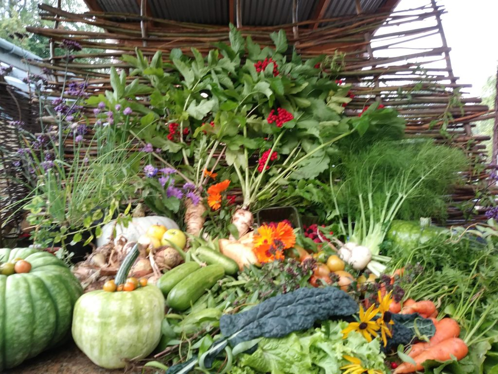 Image shows a large display of lots of types of vegetables in the community garden; pumpkins and squashes, carrots, turnips, courgettes, potatoes, brassicas including cavelo nero, salad leaves, fennel and parsnip