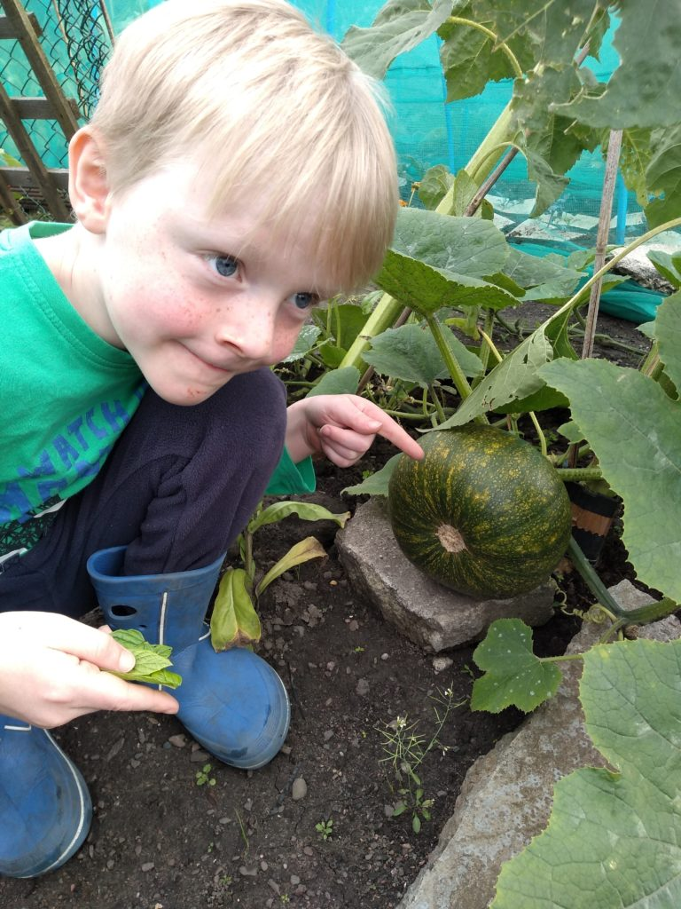 A photograph of a boy pointing to the large green pumpkin he has grown.