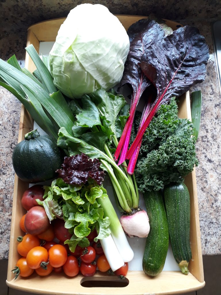 Image shows a box of homegrown vegetables; tomatoes, salad leaves, green squash variety, leeks, turnip, courgettes, kale and rainbow chard