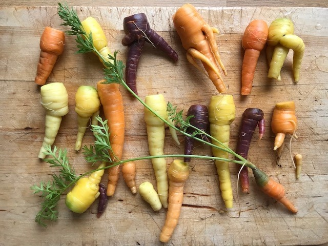 A chopping board full of wonky carrots. They are yellow, white, orange and purple and in all sorts of shapes with extra appendages.