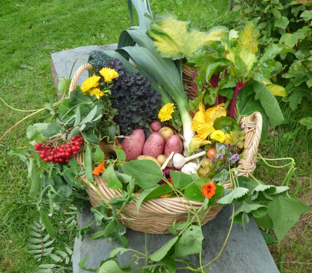 Image shows a beautiful basket of produce: potatoes, garlic, tomatoes, peas, brassicas including cavelo nero, leeks, betroot, edible flowers like nastutium, courgette flower and flowering herbs.