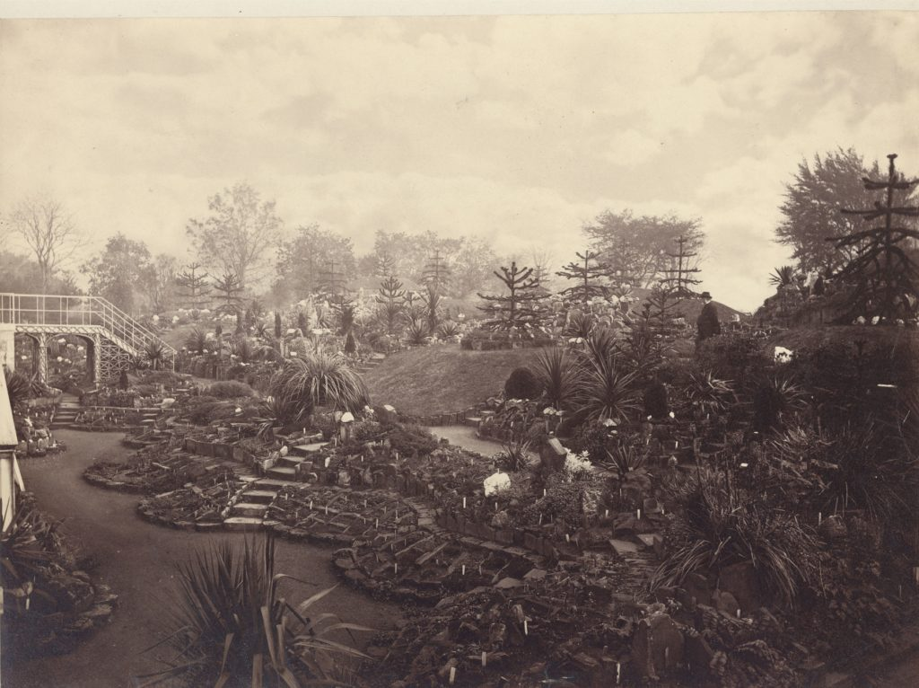 Sepia photograph showing the RBGE Rock Garden with its brick compartments and monkey puzzle topped mounds in 1874 with James McNab