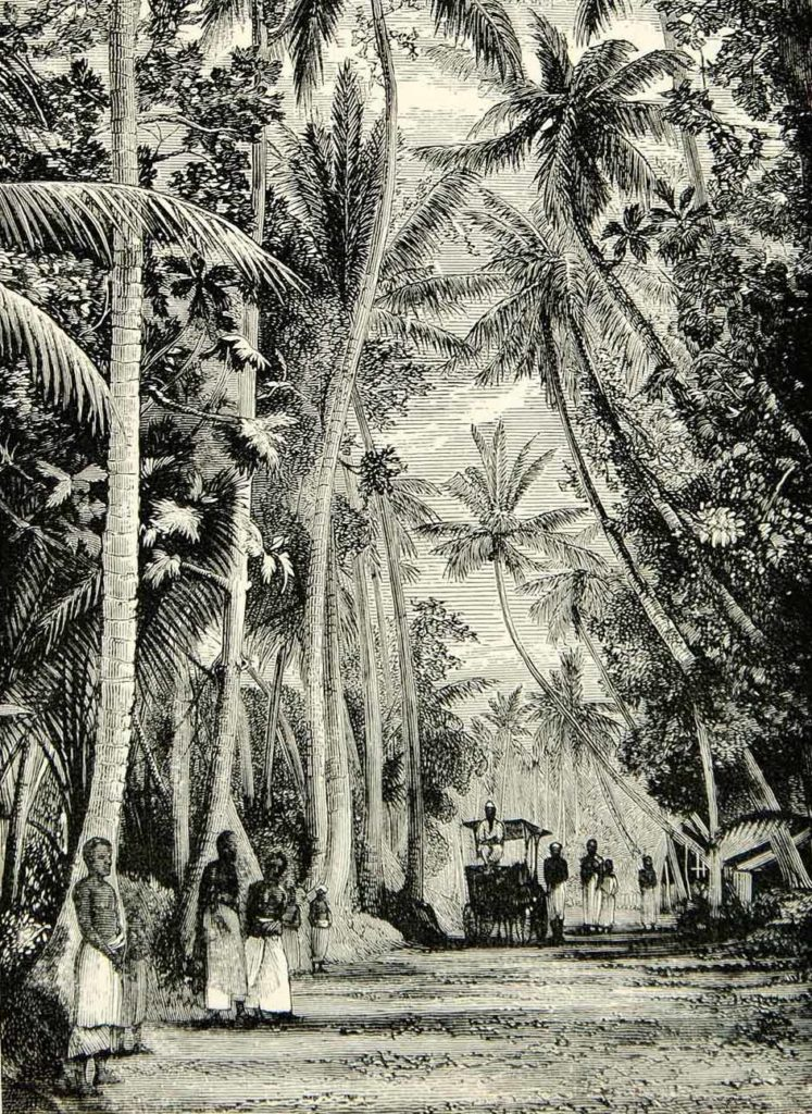 Engraving of Ceylon in the nineteenth century