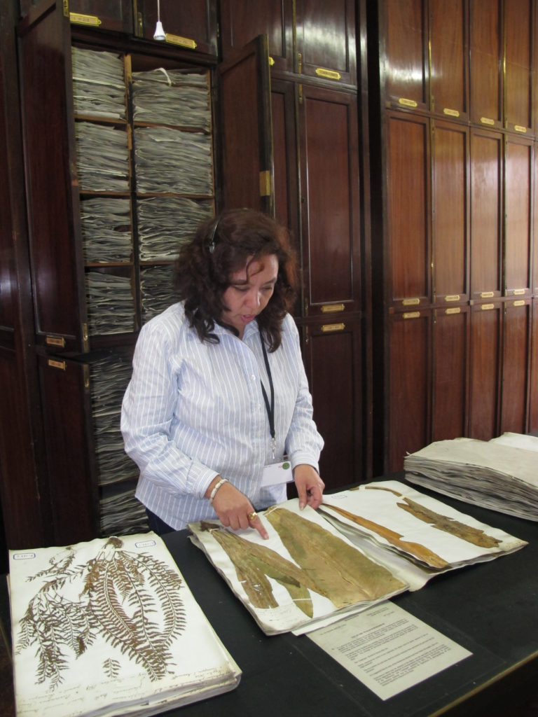 The Wallich Herbarium