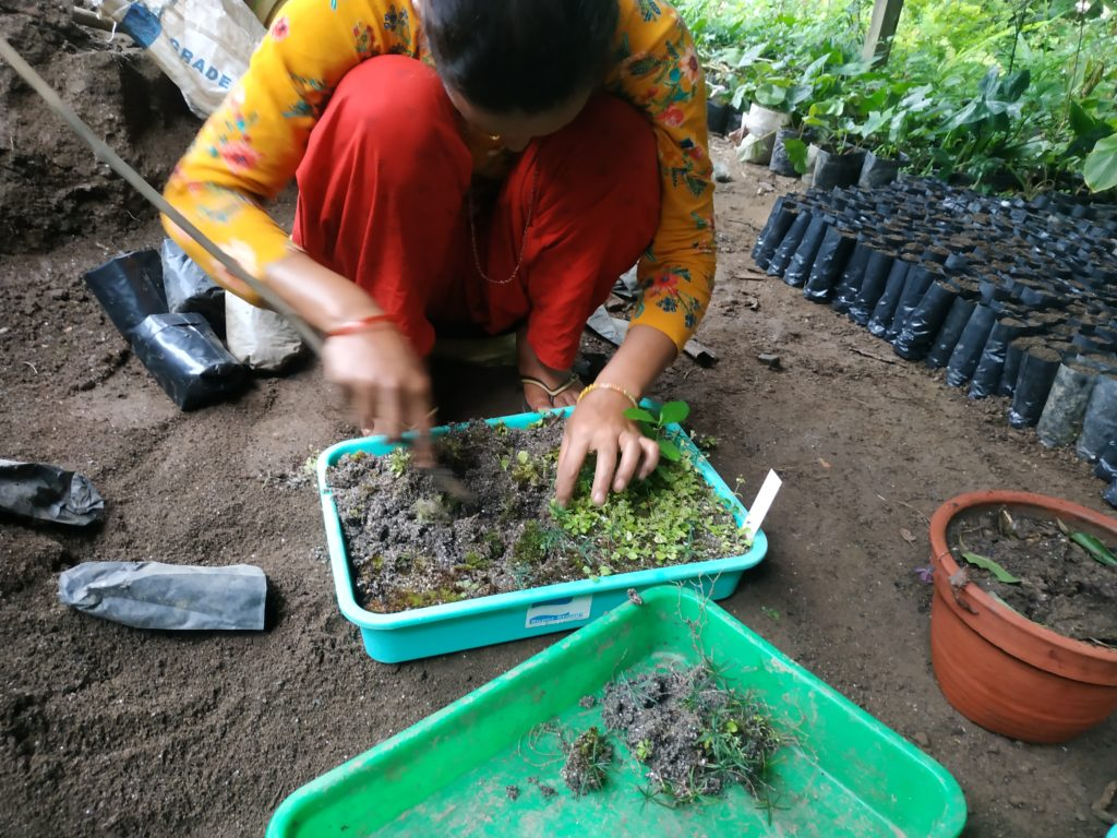 A person working with plants