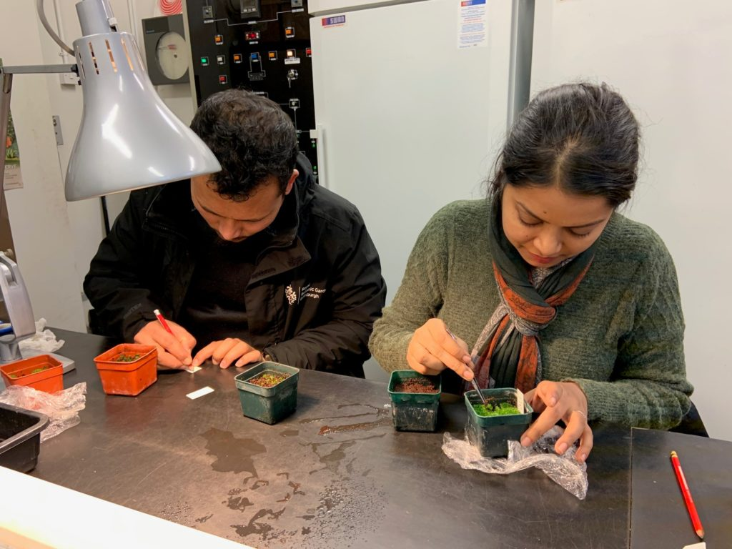 Two people working with plants