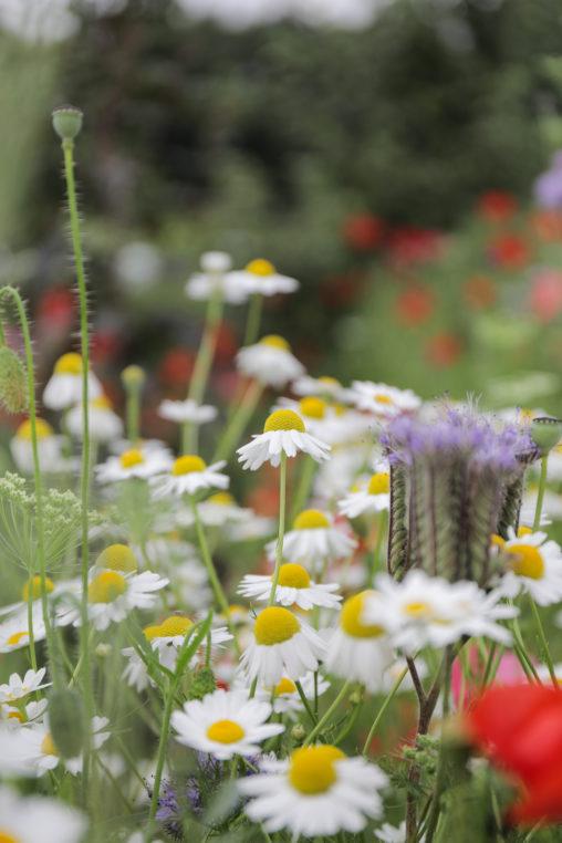 Summer meadow image
